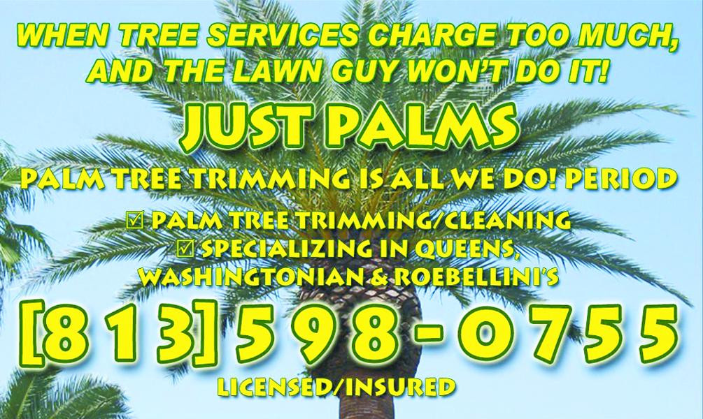 just-palms-0315